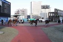 210101 18thゴールデンホース賞-01