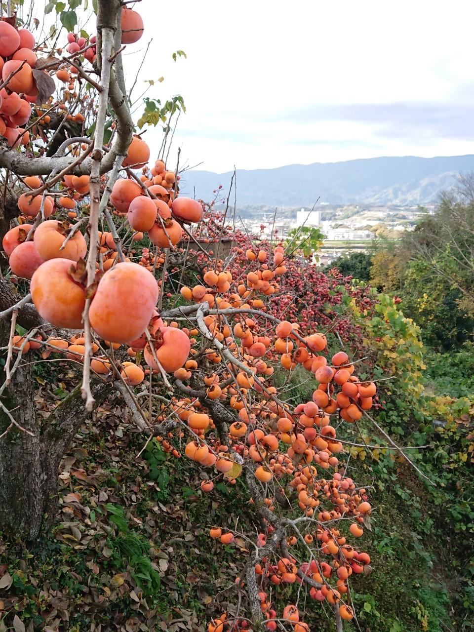 11月22日 橋本_201123_0049