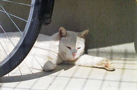 neiborcatshiro.jpg