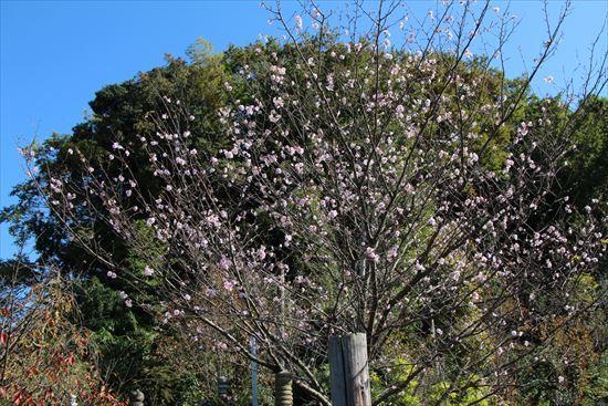 アーコレード桜2