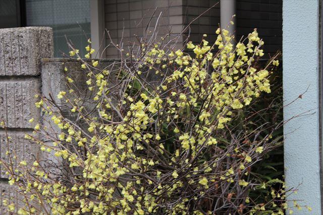 日向水木1 (2)