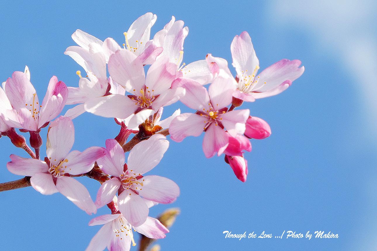 そうか桜TZ2