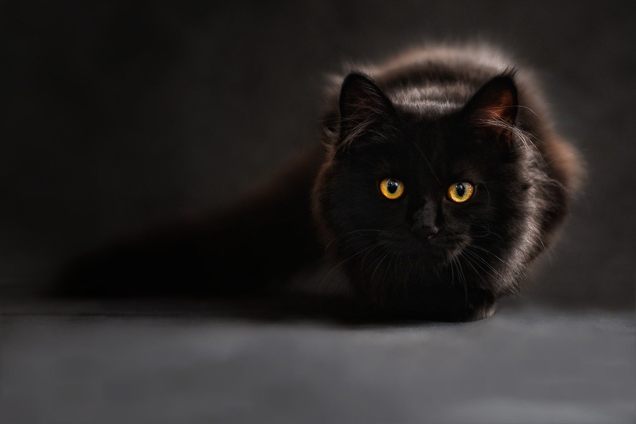 異次元に出入りする猫の話 by占いとか魔術とか所蔵画像