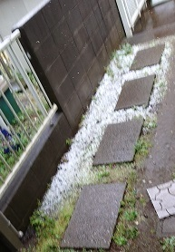 0329 雪