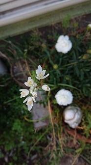 0507 お花