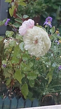 0516 お花