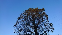 1110 木