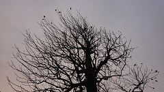 1124 k木
