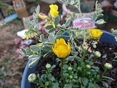 黄色いお花でパワー充電&ほんの少し刺しゅう