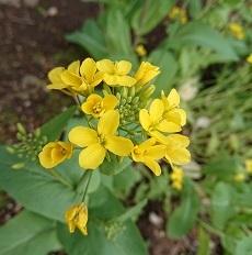 0316 黄色の花 - コピー
