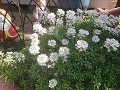 0331 お花