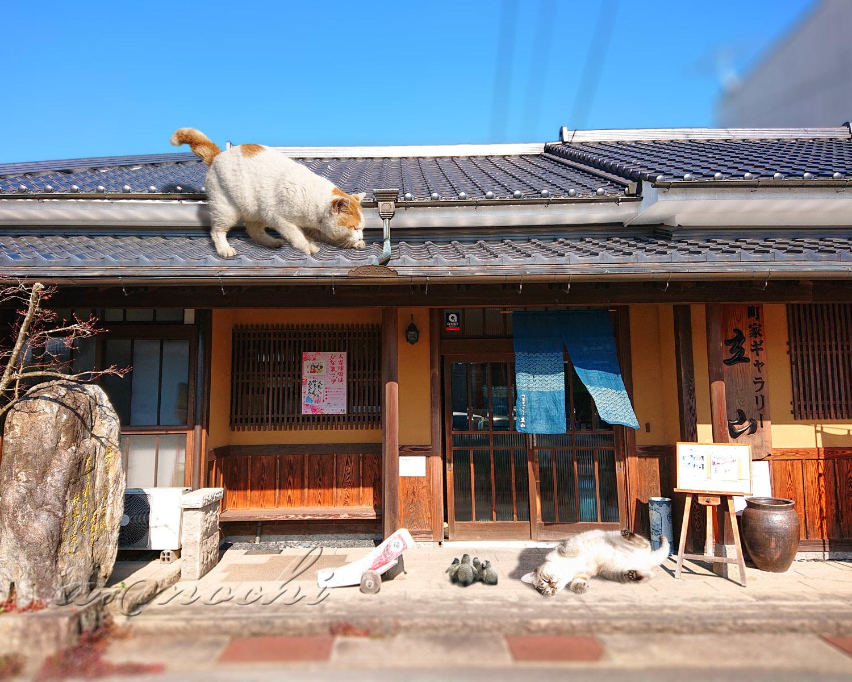 2_tateyama_shop.jpg