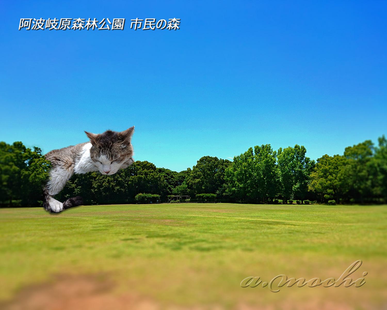 simin_no_mori.jpg