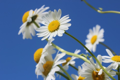 landscape-nature-branch-blossom-plant-sky-953468-pxhere-com.jpg