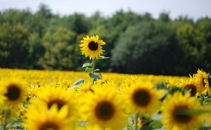 plant-field-meadow-prairie-seed-flower-1337107-pxhere-com.jpg