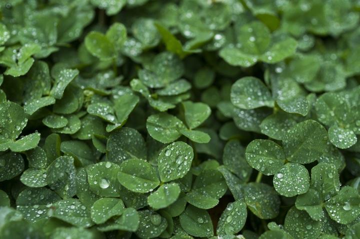 plant-rain-leaf-flower-wet-green-873308-pxhere-com.jpg