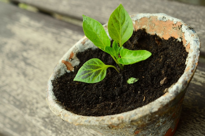 plant-wood-leaf-flower-food-green-723908-pxhere-com.jpg