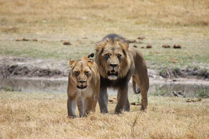 prairie-adventure-view-wildlife-wild-cat-1048897-pxhere-com.jpg