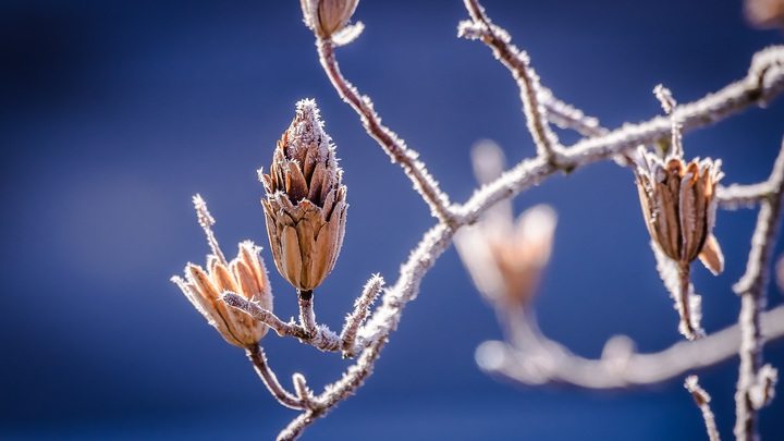 tree-nature-branch-blossom-cold-winter-760889-pxhere-com.jpg