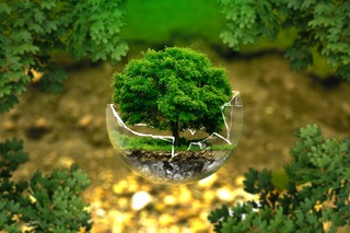 tree-nature-forest-grass-plant-lawn-1104676-pxhere-com.jpg
