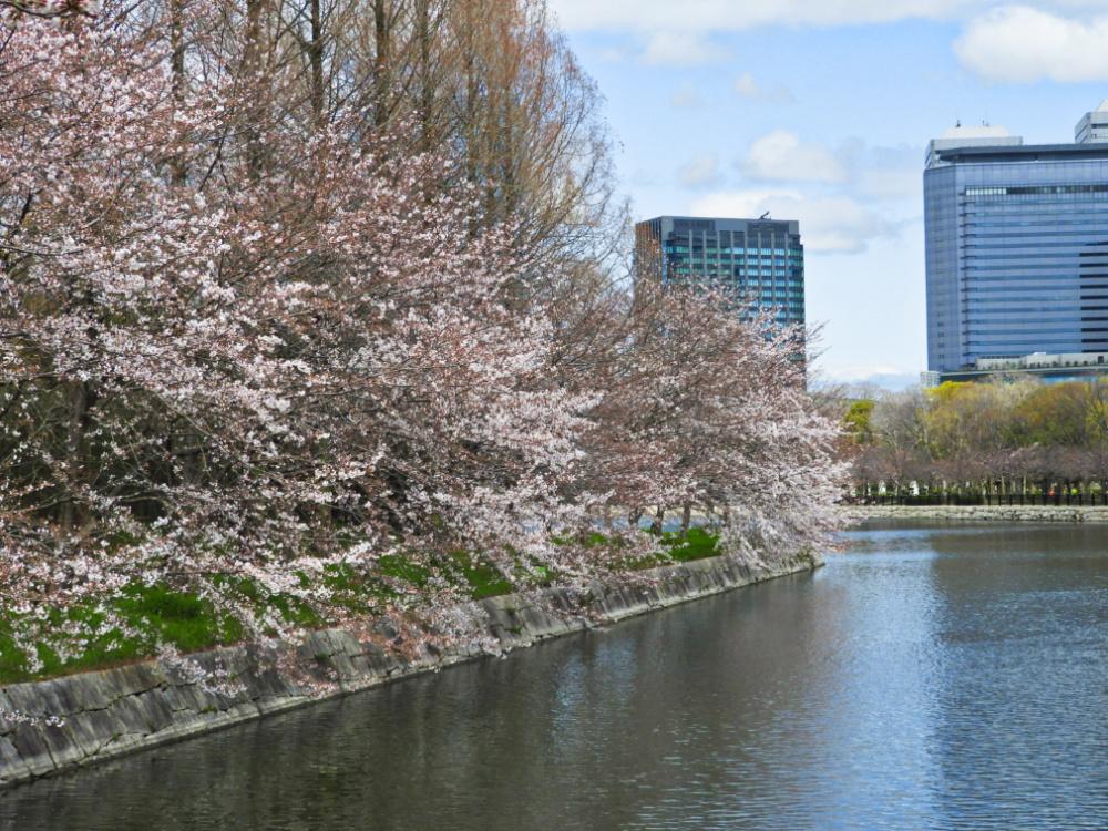桜DSCN8077