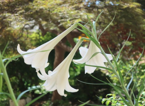 lily080220 (10)