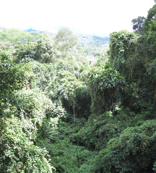 canopy wakway110414 (46)