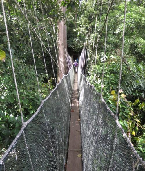 canopy wakway110414 (49)
