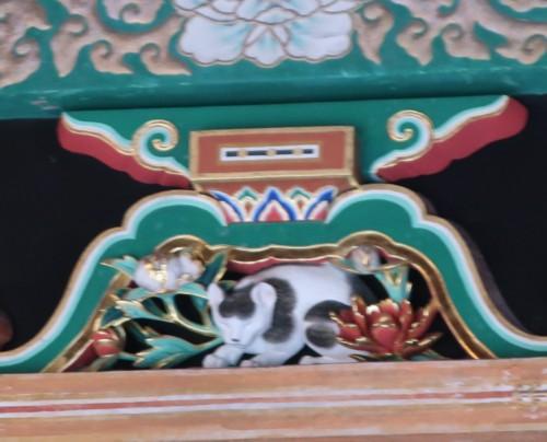 Toshogu sleeping cat091820 (33)