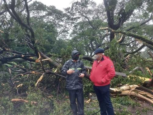 fallen trees111220 (1)