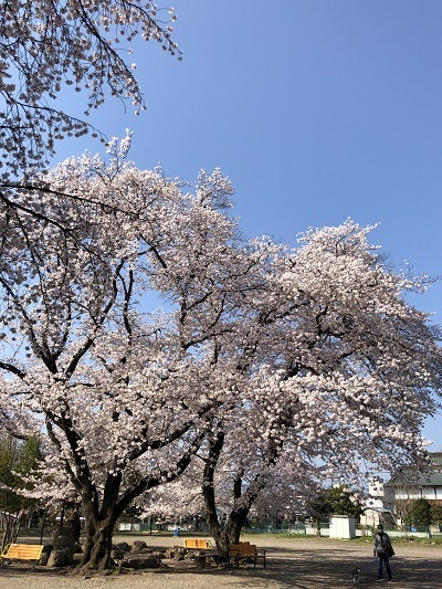 IMG_4907 (編集済み)
