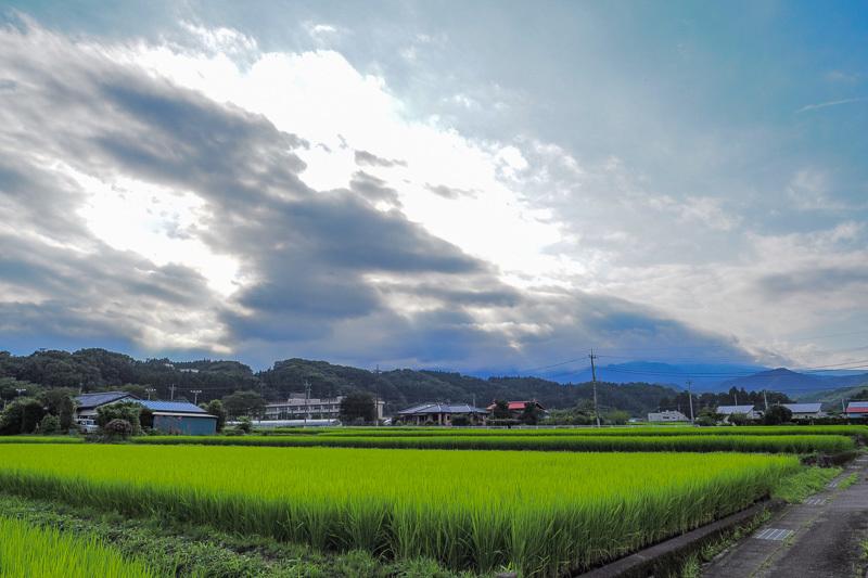 2020コロナ下の稲-2