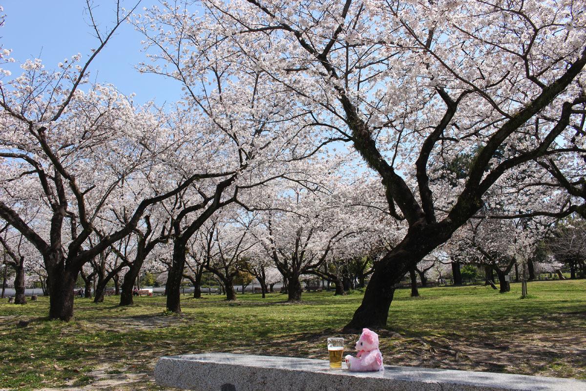 駿府城公園のソメイヨシノ と サクラベア 200406