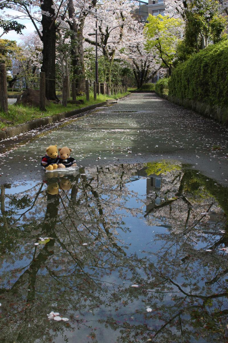 水溜の映り込みを見る 市民文化会館裏遊歩道 200414