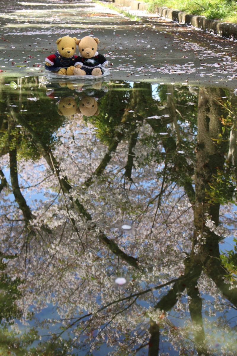 水溜の映り込みを見る 市民文化会館裏 200414