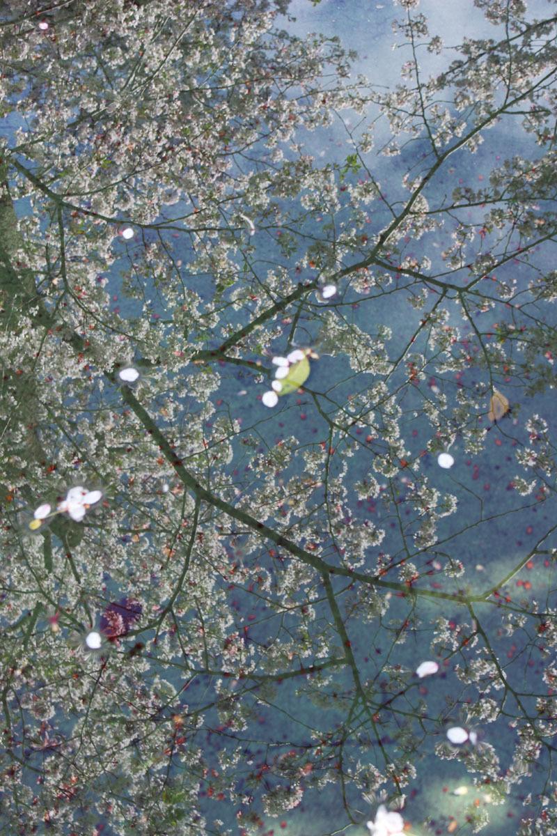 水溜の映り込み 市民文化会館裏 200414