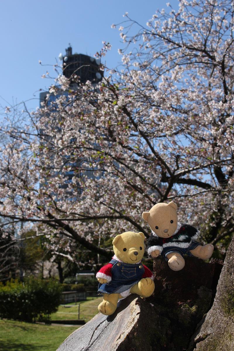 ソメイヨシノ、県庁別館と 駿府城公園 200414