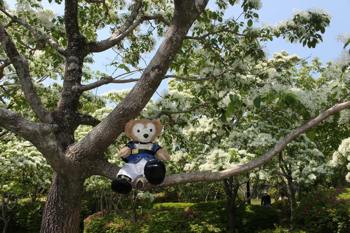 ヒトツバタゴの枝に 城北公園 Duffy 200502