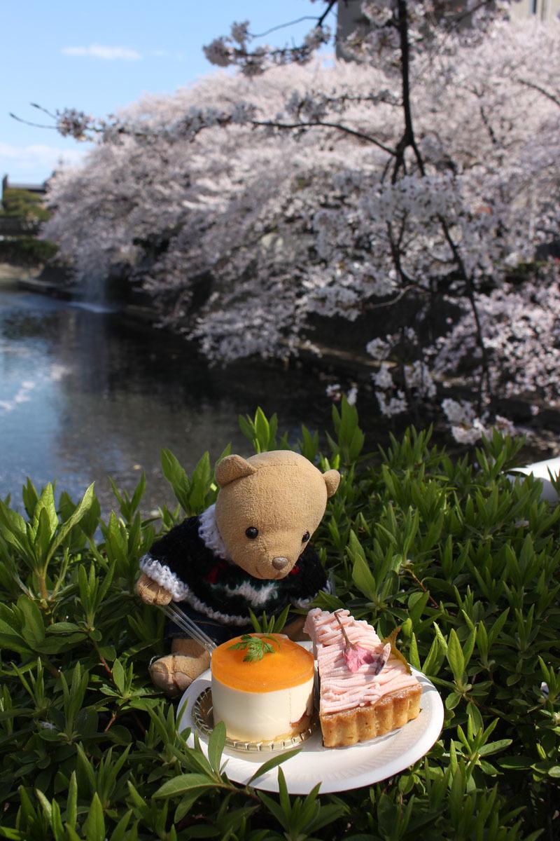 【大垣産富有柿とマスカルポーネ】【桜もち】(CHEESECAKE PRINSESS)を 美登鯉橋傍 200405