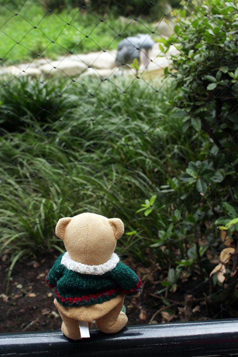 ハシビロコウ を見る 上野動物園 150906