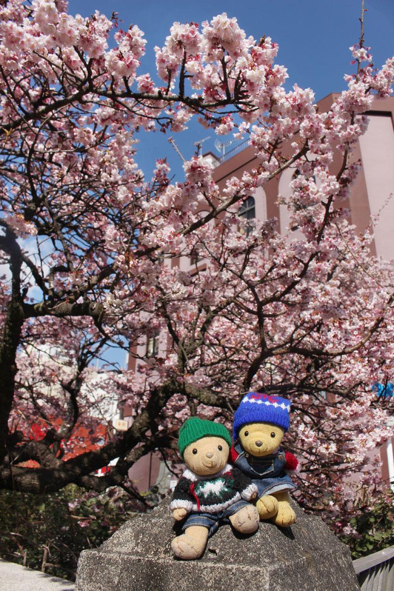 あたみ桜と 糸川・さくらはし 210205