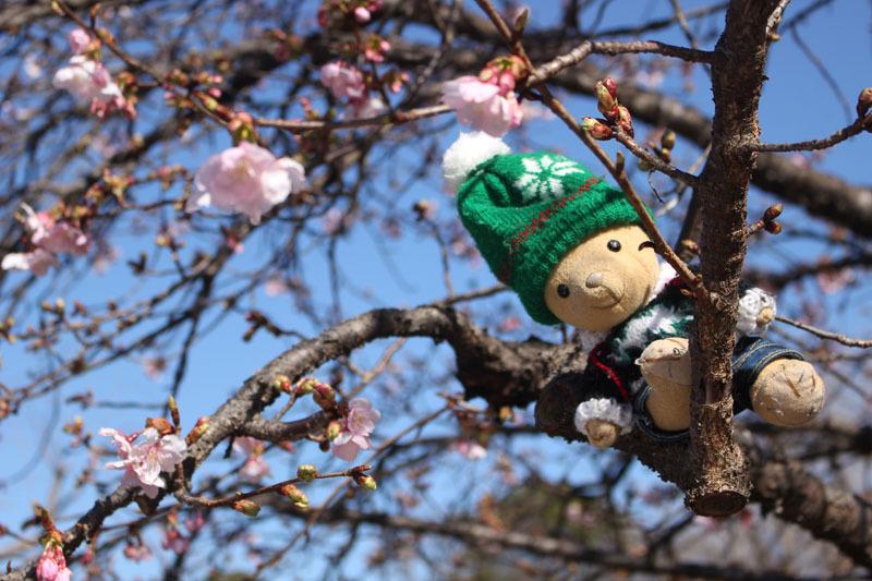 伊東小室桜の枝に 駿府城公園 210206