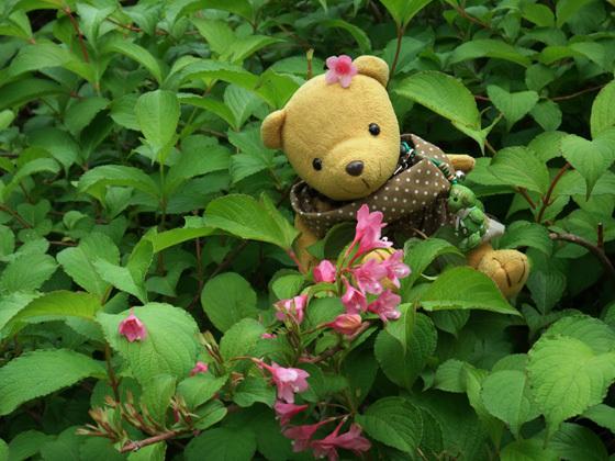 タニウツギ? 紅葉山庭園 2008