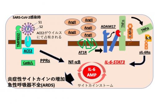 「コロナによる急性呼吸器不全症候群に、IL-6-STAT3経路阻害薬が効く」 by 平野俊夫さん(国立研究開発法人量子科学技術研究開発機構・元阪大総長) サムネイル画像