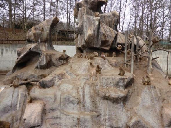 動物園で思うこと サムネイル画像