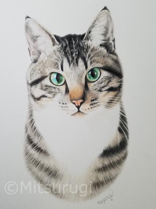 絵 イラスト ポートレート 肖像画 猫 キジ猫 キジ白