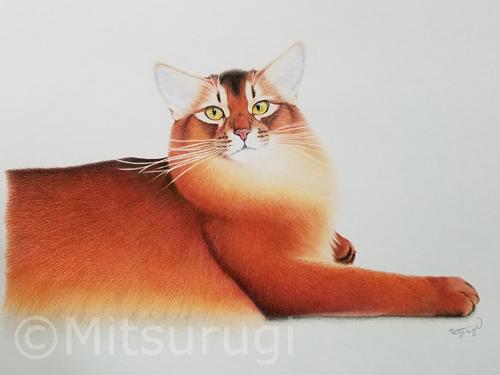 絵 イラスト ポートレート 肖像画 猫 ソマリ ルディ