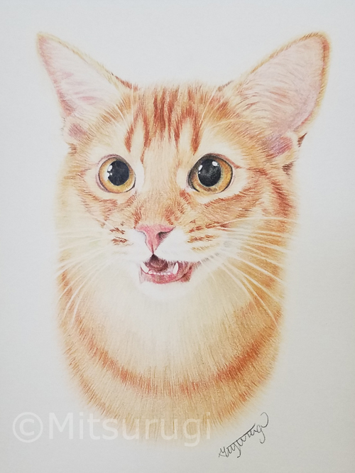 絵 イラスト ポートレート 肖像画 猫 茶トラ