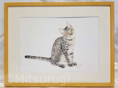 絵 イラスト ポートレート 肖像画 子猫 キジ猫