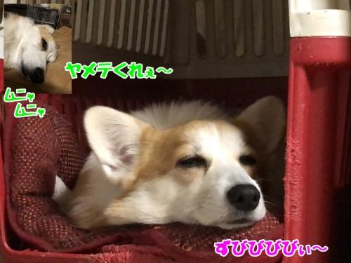 IMG_0228a.jpg